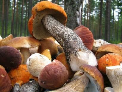 рецепты маринованные грибы на зиму
